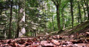 Il bosco di MontediMezzo, Riserva Unesco per la biodiversità